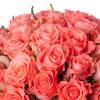 Bouquet 50 roses roses - Livraison 50 roses - France Fleurs