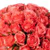 Bouquet 40 roses roses - Livraison de roses roses - France Fleurs