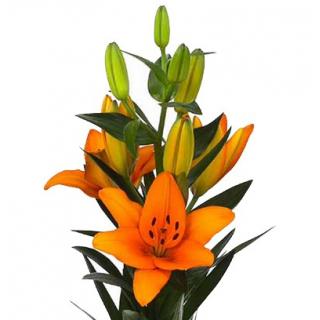 les fleurs de mon mariage bouquets et feuillage couleur orange. Black Bedroom Furniture Sets. Home Design Ideas