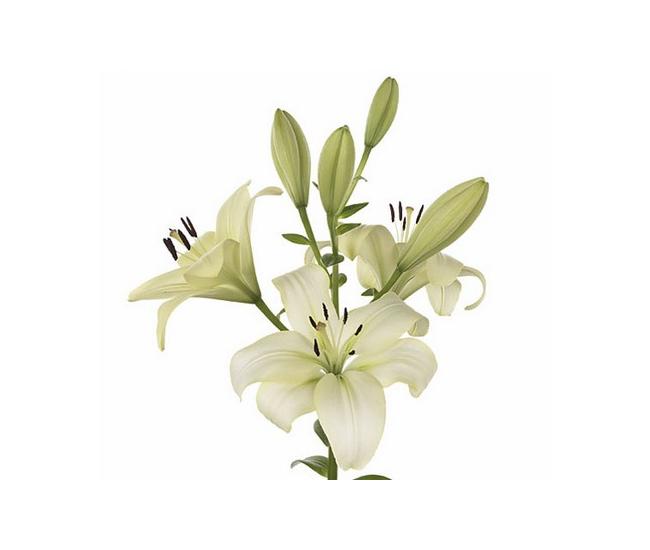 Calendrier asiatique takvim kalender hd for Livraison fleurs pas cher 10 euros