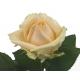 Rose Pêche Avalanche - rose pêche abricot -France Fleurs