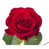 Rose Red Ribbon - livraison rose rouge - France Fleurs