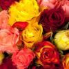 Bouquet 30 roses variées - livraison roses multicolores - France Fleurs