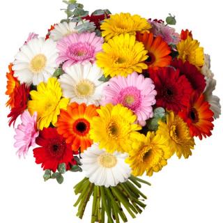 Bouquet de germinis - Livraison fleurs - France Fleurs