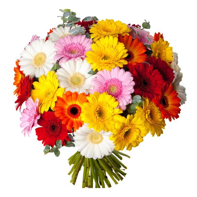 Bouquet de germinis livraison fleurs pas ch res france for Bouquet de fleurs pas cher livraison gratuite