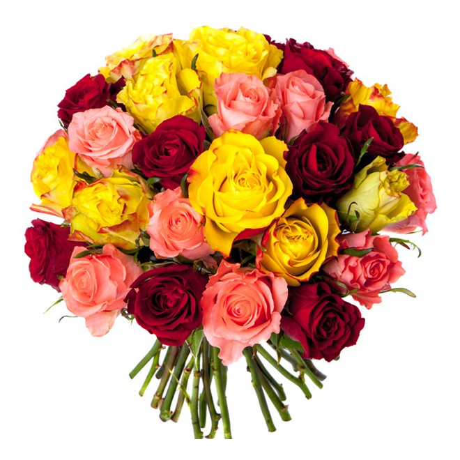 Bouquet 30 roses multicolores bouquet roses pas ch res for Bouquet de rose