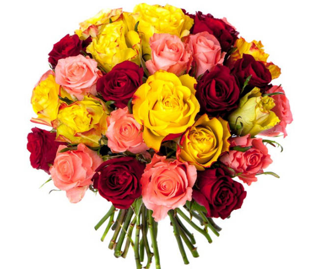 Bouquet 30 roses multicolores bouquet roses pas ch res for Bouquet de fleurs 30 euros