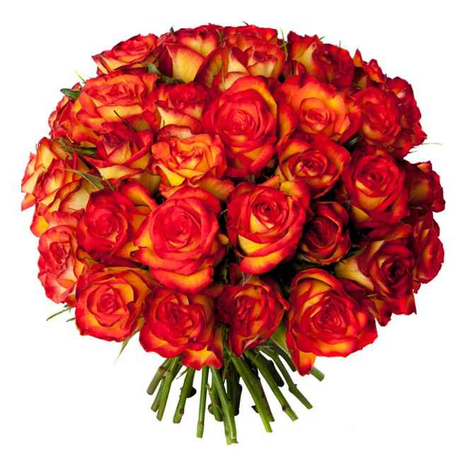 Bouquet 40 roses oranges livraison bouquet de roses for Bouquet de rose