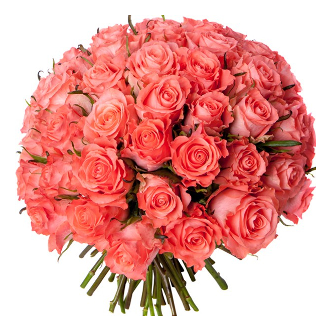 Bouquet 50 roses roses livraison bouquet de 50 roses for Bouquet de rose
