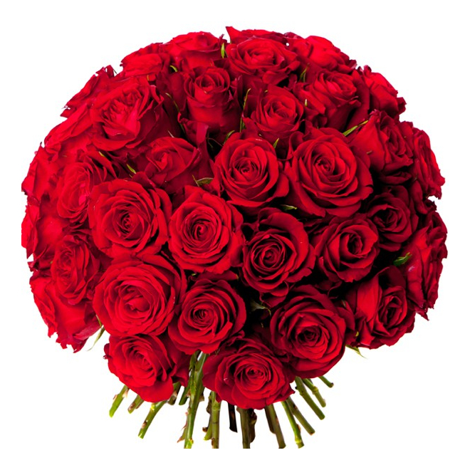 Bouquet 50 roses rouges livraison bouquet de roses for Bouquet de rose