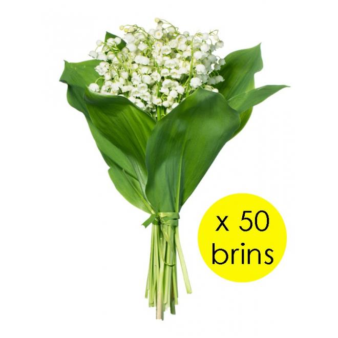 Vente de muguet pas cher achat de muguet en gros for Achat de fleurs