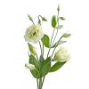 Lisianthus crème (10 tiges) - France Fleurs
