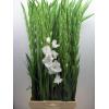 Glaïeul blanc (10 tiges) - Fleur coupée - France Fleurs