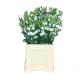 Lisianthus blanc (10 tiges)