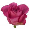 Rose H2o - fleur coupée