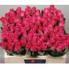 Rose H2o - rose fushia