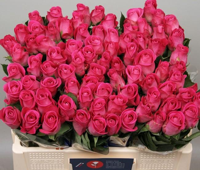 rose fushia - fleurs mariage - france fleurs