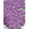 Allium (10 tiges)
