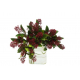 Skimmia rouge (botte 5 tiges)