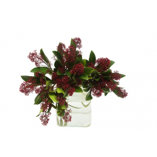 Skimmia rouge (botte 5 tiges)