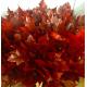 Feuille de chêne rouge (10 branches)