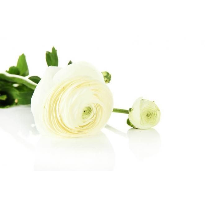 renoncule blanche livraison fleurs coup es france fleurs. Black Bedroom Furniture Sets. Home Design Ideas