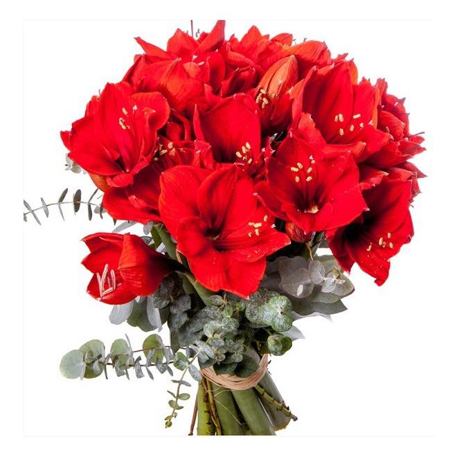 Bouquet d 39 amaryllis livraison fleurs no l france fleurs for Amaryllis pour noel