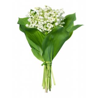 achat muguet pas cher et livraison de muguet domicile france fleurs. Black Bedroom Furniture Sets. Home Design Ideas