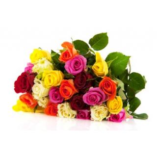 Rose 40 cm (20 tiges)