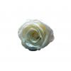 8 roses éternelles blanches