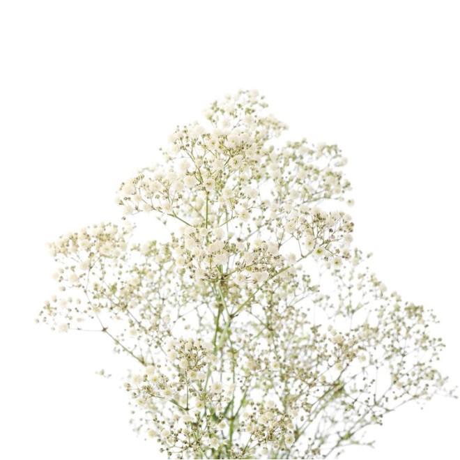 Gypsophile million star livraison fleurs mariage for France fleurs