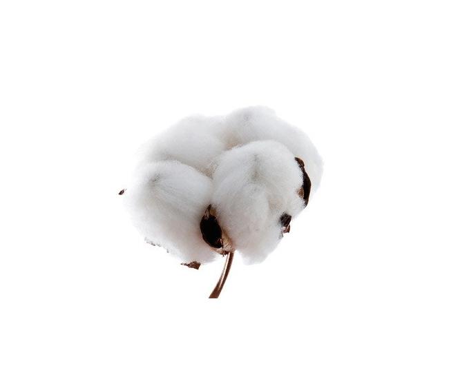 bouquet de coton naturel bouquet fleurs de coton. Black Bedroom Furniture Sets. Home Design Ideas