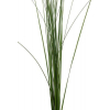 Steel grass (10 tiges) - France Fleurs