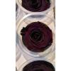 6 roses stabilisées jaunes - roses éternelles violettes foncées