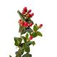 Hypéricum rouge (25 tiges)  - France Fleurs