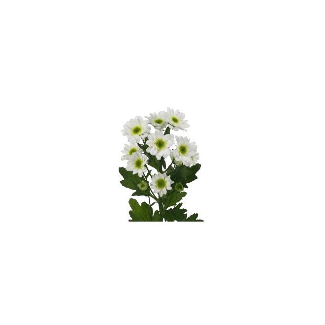 Santini blanc livraison de fleurs mariage france fleurs for Livraison fleurs france