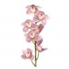Orchidée cymbidium vert - France Fleurs