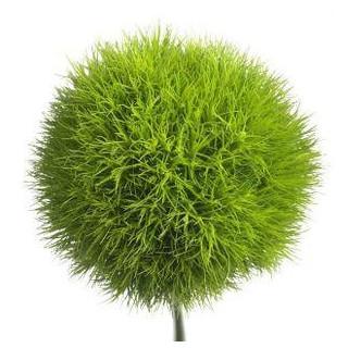 oeillet sims vert livraison fleur coup e france fleurs. Black Bedroom Furniture Sets. Home Design Ideas