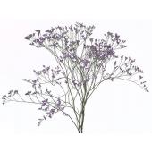 Limonium Violet (5 tiges)