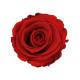 6 roses stabilisées rouge - roses éternelles - France Fleurs