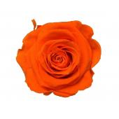 6 roses éternelle oranges