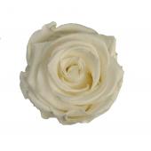 6 roses éternelles blanches