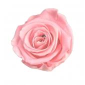 6 roses éternelles rose pâle