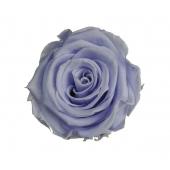 6 roses éternelles lavande