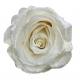 6 roses éternelles argentées