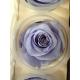 6 roses éternelle lavande