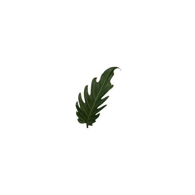 Xanadu (10 tiges) - France Fleurs