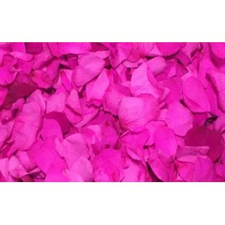 Pétales de roses éternelles fushia