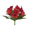 Alstroemeria rouge