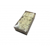 Lichen stabilisé (500 gr.)